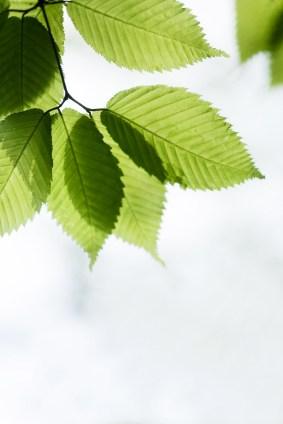 leavescloseup