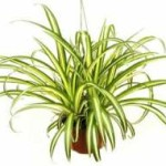 Purifying the Air:  Plants and Machines